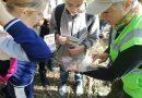 Lāču pamatskolas 6. klases audzēkņi Mežu ekspedīcijā